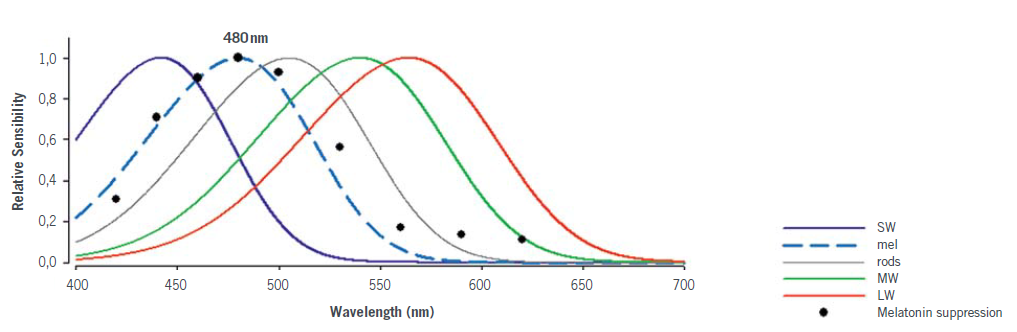 The spectral sensitivity of standard photoreceptors (cones SW, MW, LW and rods) and of melanopsin (mel) in Humans